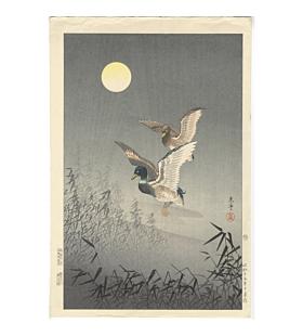 koitsu tsuchiya, ducks