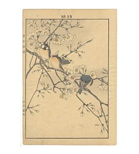 keinen imao, bird and flower, cherry blossom, sakura, natural world, botanical
