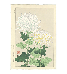 shodo kawarazaki, white chrysanthemum, flower print, botanical