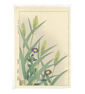 shodo kawarazaki, Forget-Me-Not and Barley, flower