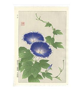 shodo kawarazaki, blue morning glory, flower