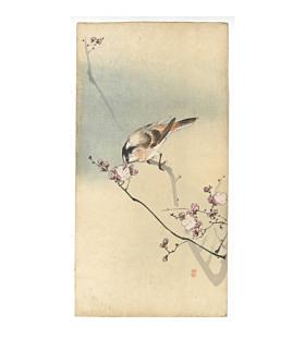 koson ohara, small bird, plum tree, kachoga