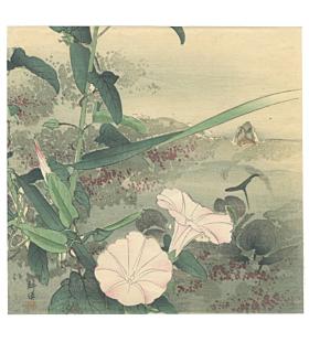 kogyo tsukioka, morning glory, flower print, nature