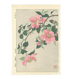 shodo kawarazaki, Sasanqua (Camellia Japonica), flowers, botanical