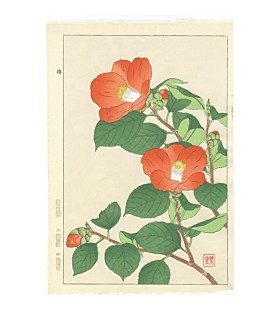 Shodo Kawarazaki, Camellia, Flowers, Botanical