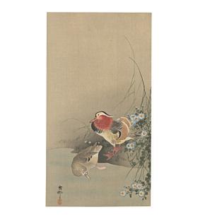 koson ohara, Pair of Mandarin Ducks and Wild Chrysanthemum, kachoga