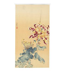 Chrysanthemum Flowers, koson ohara