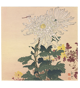 Dragon Fly and Chrysanthemum, flower print, insect