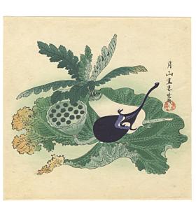 kyosai kawanabe, aubergine study, natural world, sketch, egg plant