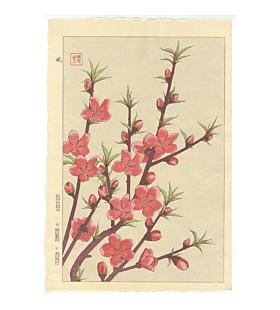 shodo kawarazaki, peach blossoms, botanical, japanese flowers