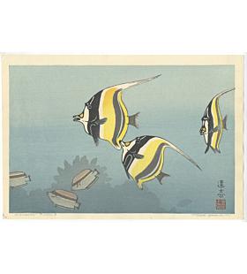 toshi yoshida, hawaiian fishes, exotic