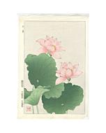 shodo kawarazaki, red lotus, flower print