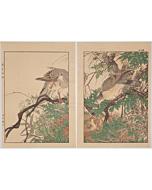 keinen imao, Millettia and Pigeons, Keinen's Birds and Flowers Album, Summer