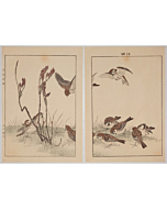 keinen imao, Peony Sprout and Sparrows, Keinen's Birds and Flowers Album, Spring