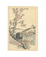 bairei kono, Green Pheasant and Peach Blossoms,  Four Seasons, Bairei's Album of Flowers and Birds(楳嶺花鳥画譜 春夏秋冬)