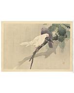 Hanko Kajita, Pigeons in the Rain