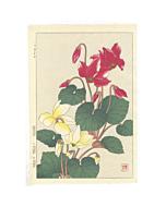 shodo kawarazaki, cyclamen, flower print