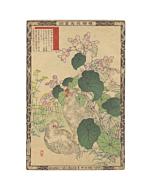 Bairei Kono, Silkie and Hardy Begonia, Album of Flower & Birds