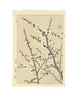 shodo kawarazaki, flowers, plum blossoms, japanese flowers, japanese plum, decorative
