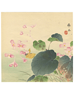 chikuseki yamamoto, flower print, natural world, begonia, butterfly