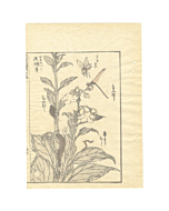 hokusai katsushika, manga, insects, sketches