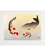 kunio kaneko, koi fish, happy time, contemporary japanese art