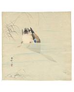 koson ohara, Diving Mallard, bird print