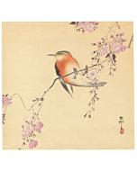 koson ohara, bird and flower, cherry blossom, sakura, blooming flower, japanese spring