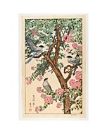 toshi yoshida, summer, birds