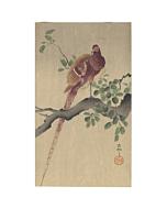 Koson Ohara, Copper Pheasant Perching on Branch, Bird, Animal, Original Japanese woodblock print