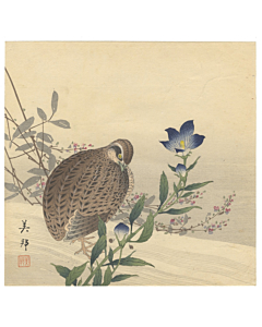 Japanese Quail and Gentian, Bird and Flower