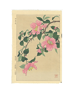 shodo kawarazaki, botanical, japanese flowersm japanese camellia
