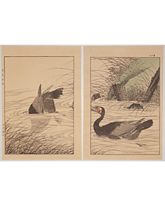 Keinen Imao, Princess Feather, Cogon, and Cormorants, Birds and Flowers Album, Summer
