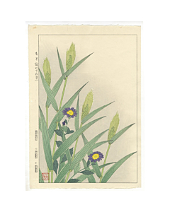 shodo kawarazaki, Forget-Me-Not and Barley, flower