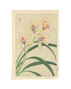 shodo kawarazaki, orchid, botanical, flower