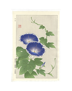 shodo kawarazaki, blue morning glory, flower