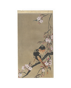 koson ohara, redstart, birds, cherry tree