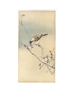 koson ohara, small bird, plum tree, kachoga