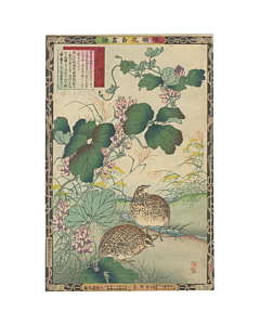 Bairei Kono, Vine and Quail, Album of Flower and Birds
