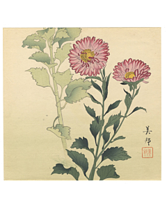 purple chrysanthemum, flower print, plant, decorative, interior design