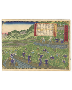 hiroshige III utagawa, Kii Province, Mandarin Orange Farm, Famous Products of Japan (大日本物産図会)