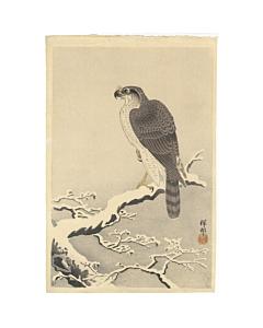 koson ohara, Sparrow-hawk on Snowy Pine Branch, winter