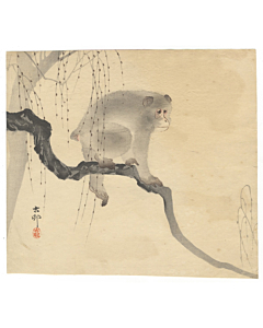 koson ohara, monkey on a branch