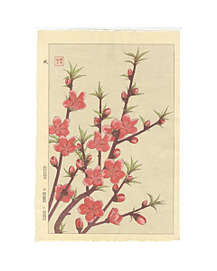 shodo kawarazaki, peach blossoms, botanical, japanese flowers