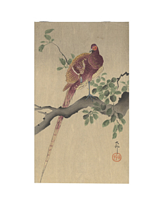 Koson Ohara, Copper Pheasant Perching on Branch, Bird, Animal, Original Japanese woodblock print